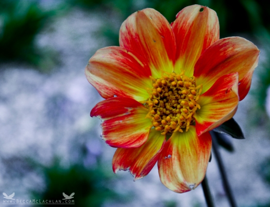 Flower at Aramoana, Dunedin NZ