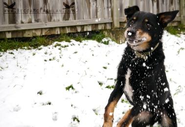Mack catching snow balls.