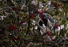 Pidgin in the tree...