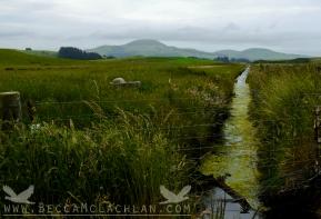 Mosgiel/Outram NZ