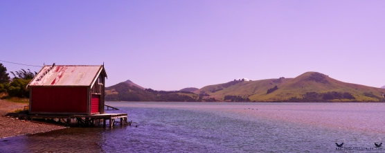 Otago Peninsula, Dunedin, New Zealand.