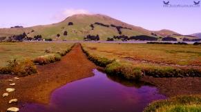 Otago Peninsula, Dunedin, New Zealand.