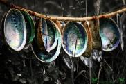 Paua Shells, Curio Bay, Southland, New Zealand.