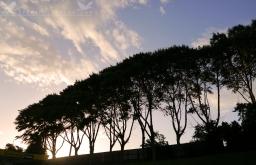 Tree Line, South Dunedin, New Zealand.