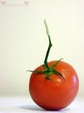 Truss Tomato.