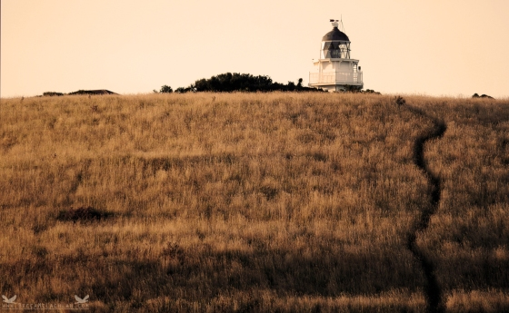 Lighthouse at Katiki Point, Moeraki Peninsula, New Zealand.