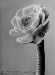 Day 4 - 04/01/17 - Succulent