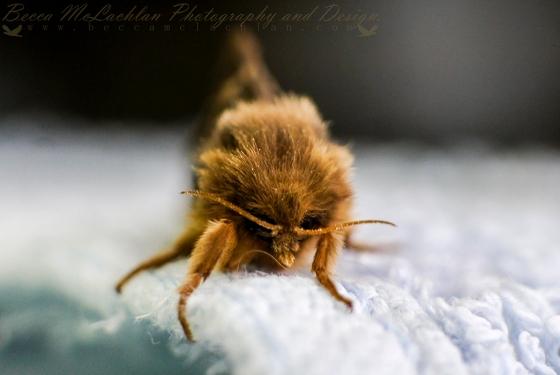 Day 17 - 17/01/17 - Moth