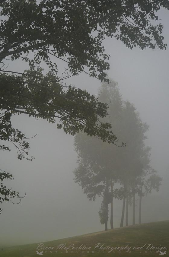 Day 22 - 22/01/17 - Foggy Sunday