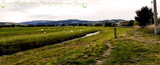 Day 41 - 10/02/17 - Silver Stream, Carlyle Road, Mosgiel, New Zealand.
