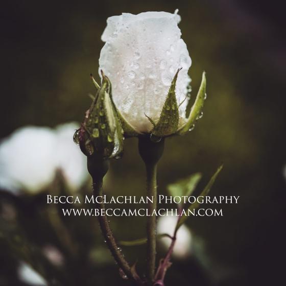 panasonic G9 | Becca McLachlan Photography